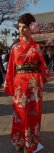 "Photo3: Dancing Girls  ""Kimono"" robe XL ( Wide Size ) (3)"